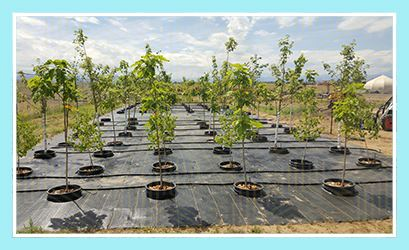 Community Spotlight - Tree Nursery - Town of Erie