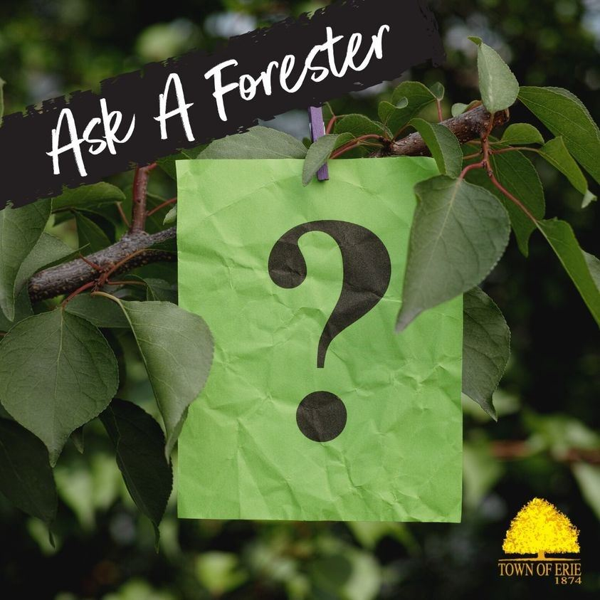 ask a forester